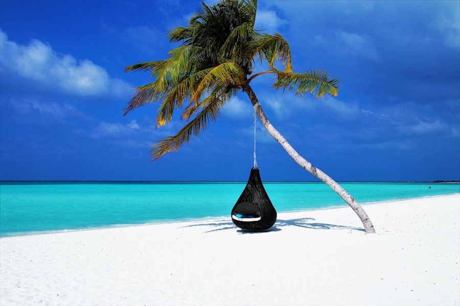 Maldives Packages - Chair in Palm Tree